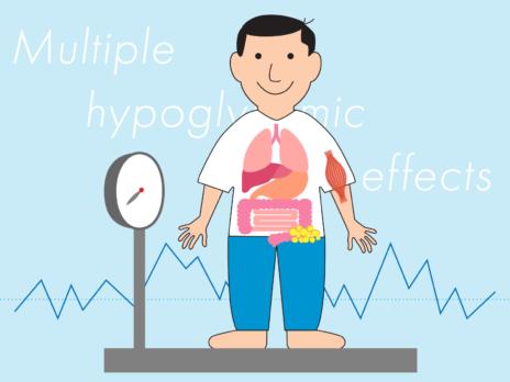 インスリンの効きを良くして血糖値を下げる「ビグアナイド薬」